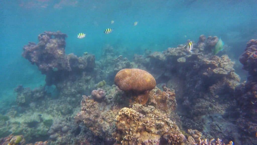Reef at Koh Rong Sanloem, Cambodia