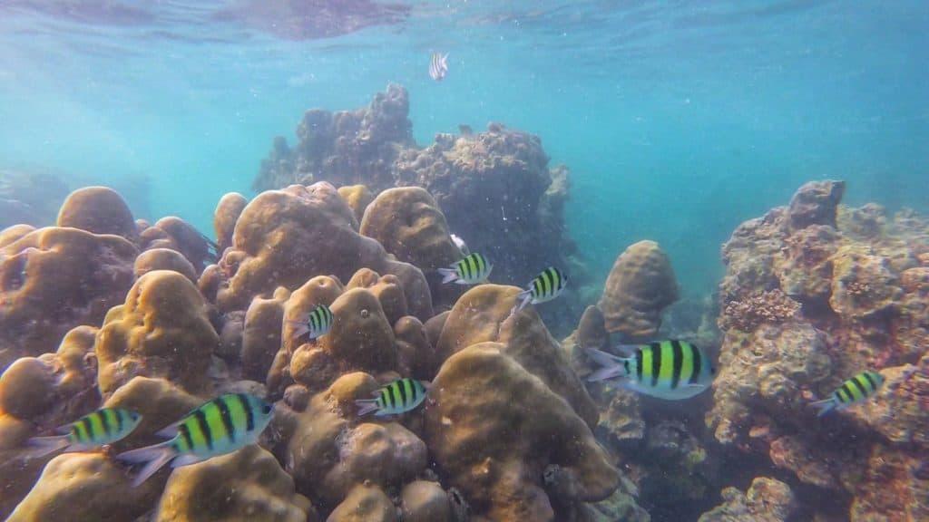 Reef on Koh Phi Phi