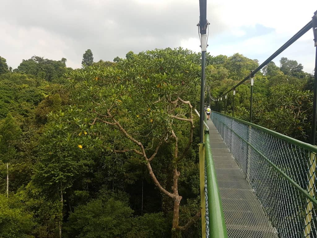 Suspension Bridge in Mac Ritchie Nature Park, Singapore