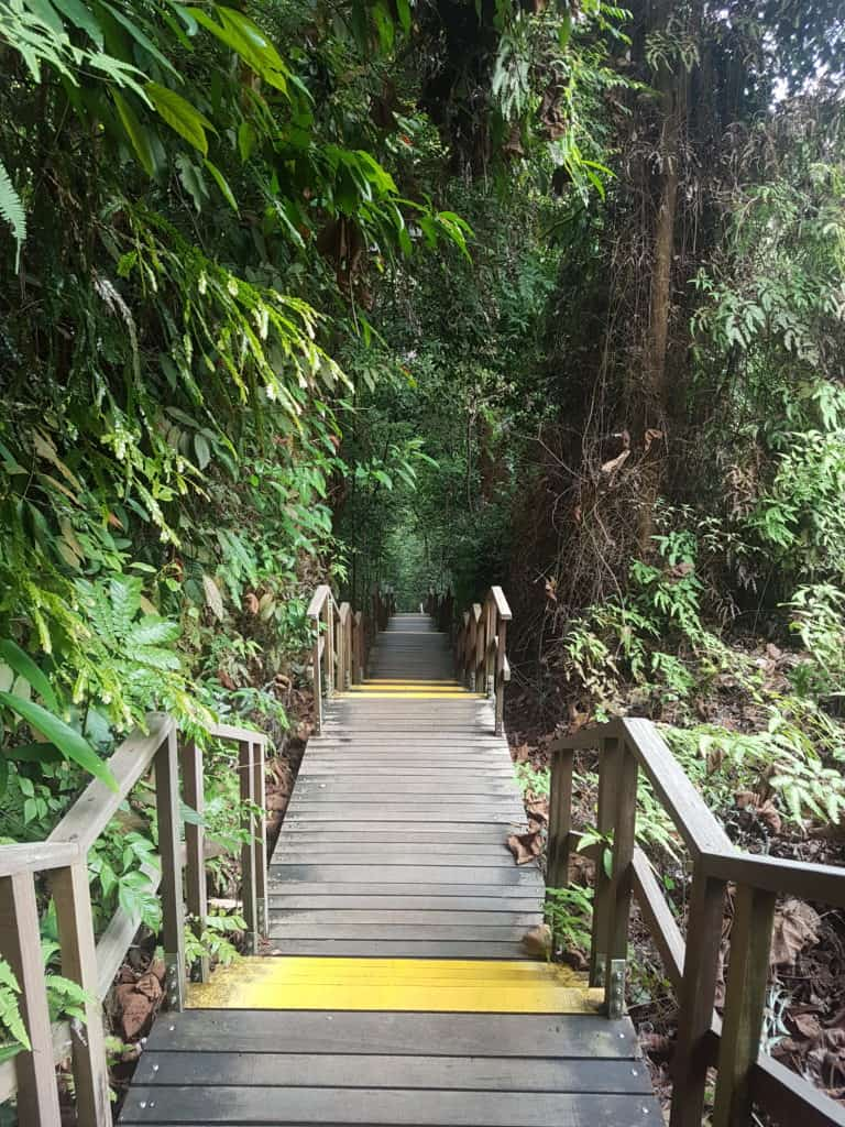 One of the paths at Mac Ritchie Nature Park, Singapore