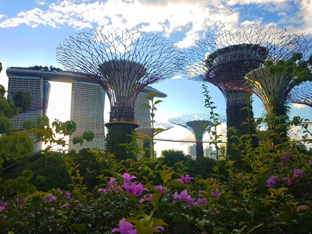 Supertrees are Gardens by the Bay, Singapore
